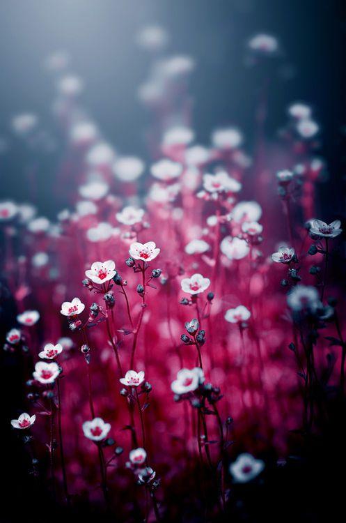 Magical Flowers | ajkabajka