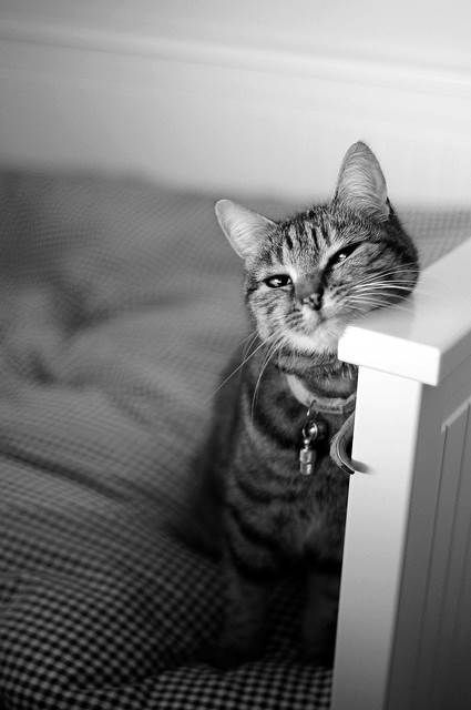 Cute cat. I think