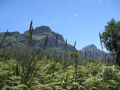 Table Mountain behind Kirstenbosch National Botanical Garden in Cape Town