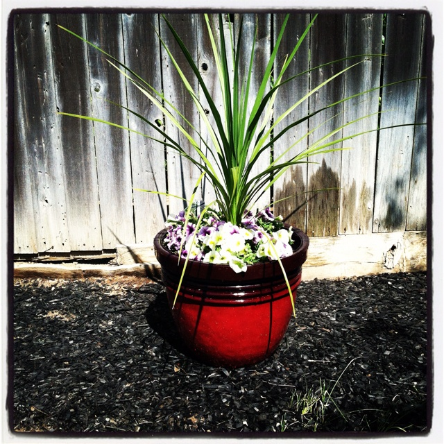 56 best images about potted flower ideas on pinterest container