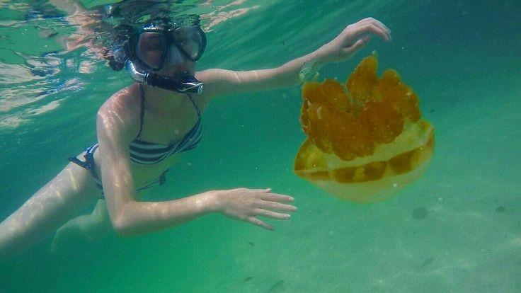 Jellyfish at Kakaban Lake, East Borneo, Indonesia