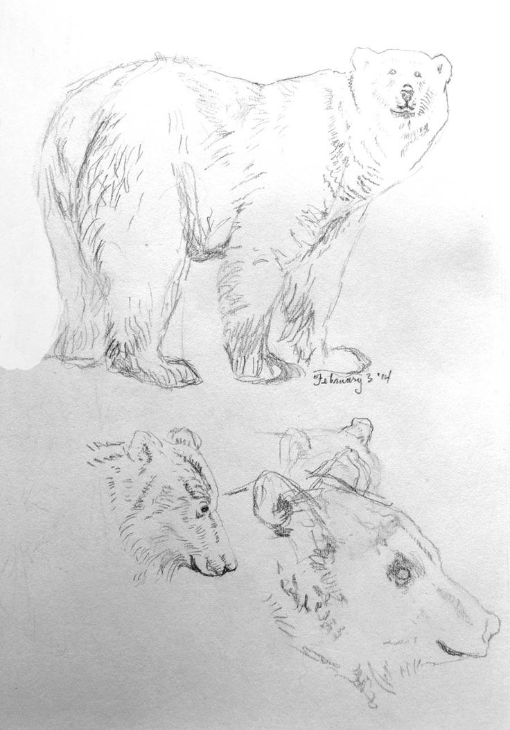 As I am left-handed, my sketches can become pretty smudgy. #grizzlybeardrawing #oiginalbearsketch #polarbeardrawing