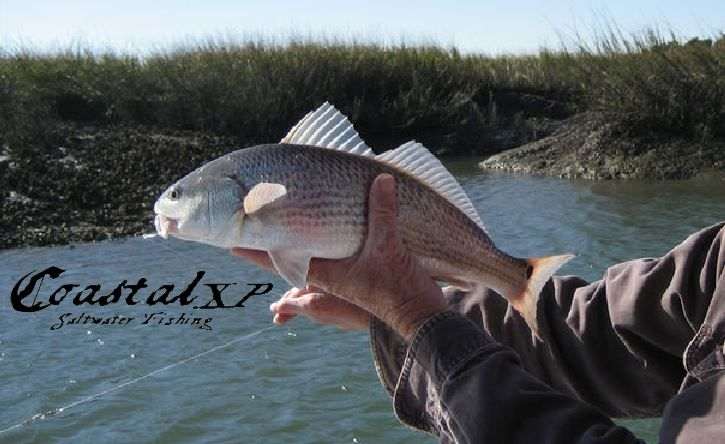 How to catch redfish basically it boils down to this for How to fish for redfish