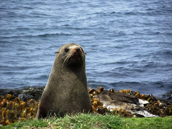Seals Checking out the Locals Nature Photography by KarenLawsonArt, $22.00