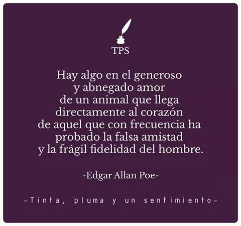 edgar allan poe dark romantic Edgar allan poe, born in boston, massachusetts in 1809, lived a life filled with tragedy poe was an american writer, considered part of the romantic movement, in the sub-genre of dark romanticism.