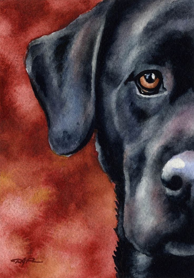 """""""BLACK LAB"""" ---- [Dog Signed Art Print]~[Artist David J. Rogers]~[About the Artist David J. Rogers lives & paints in central California. He has been a full time professional artist for over 20 years & his artwork is actively collected worldwide. He sells his art through juried art shows throughout California, through various galleries, and via the internet.]'h4d'120831"""