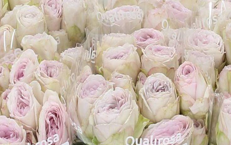 Spray roses   Qualirosa
