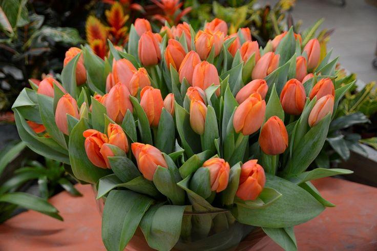 oggi nuovi arrivi nella nostra fioreria, c'è già aria di primavera!!