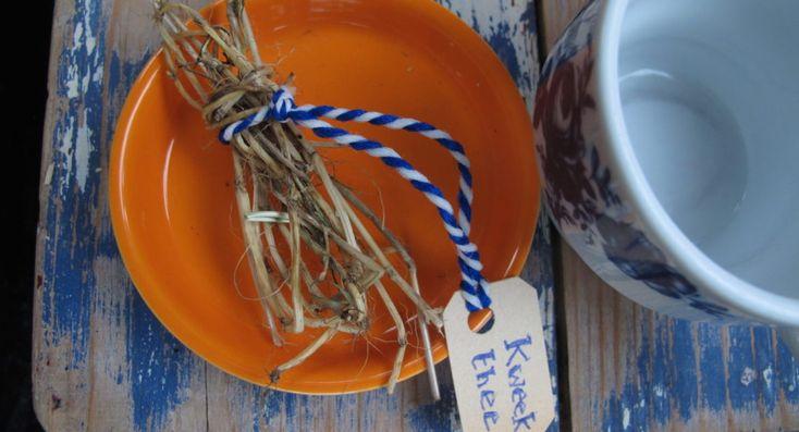 Maak van dit gevreesde onkruid een supergezonde thee, salade of smoothie