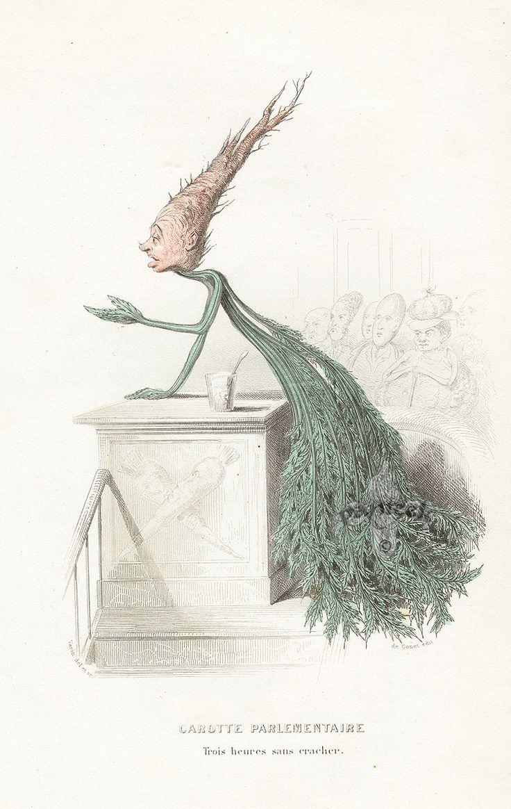 22 best botanical images on pinterest botanical prints