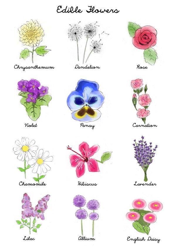 Edible Flowers Guide