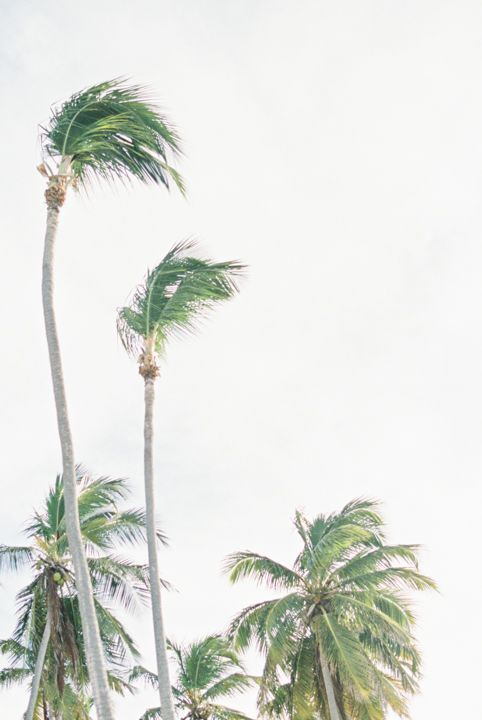 Palm trees in the Dominican Republic. Photography by Heidi Lau.