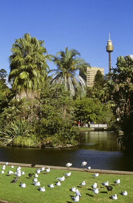 17 Best Images About My Australia On Pinterest Coast Australia Emu And War Memorials