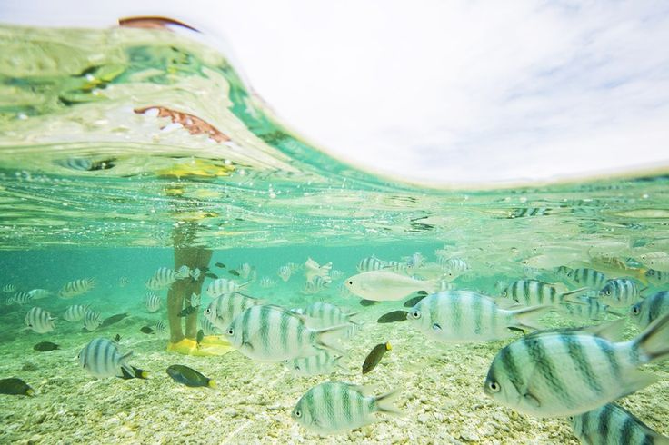Quotes On Fringing Reefs: 138 Best Images About Great Barrier Reef On Pinterest