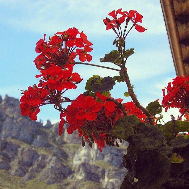 Navarra. Photo by isabelmartinj