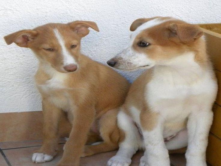#recomanat Clínica Veterinària Tot Animal #veterinaris #animals visites a domicili i servei d'urgències 24 hores.