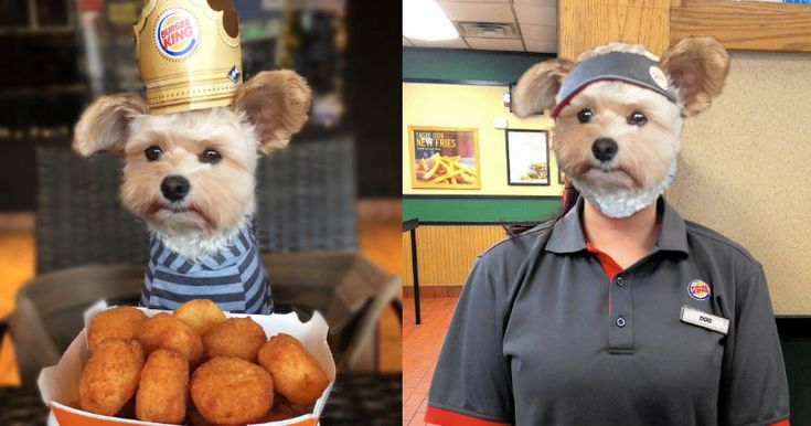 Dog Wearing a #Burger_King Crown Gets a #Photoshop_Battle That'll Make You Want to Have It Your Way http://ibeebz.com