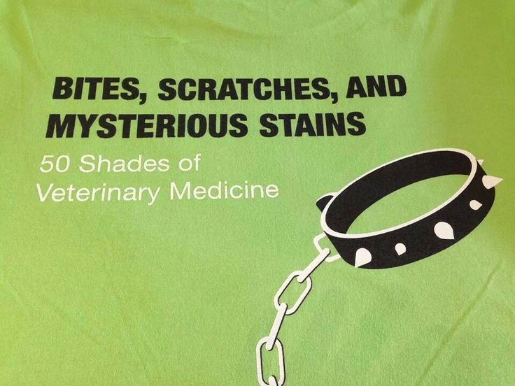 17 Best ideas about Vet Med on Pinterest | Veterinary technician ...