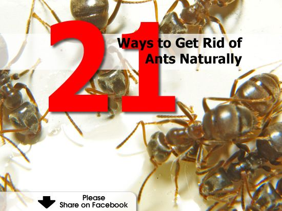 how to get rid of fire ants outside naturally