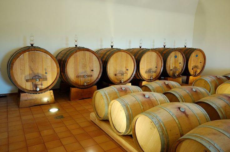 Fattoria di Fubbiano - Tuscany wine tasting tour - Lucca olive oil tasting - wine cellar guided tour