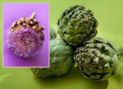 Artichaut bienfaits, vertus : phytothérapie   After ...