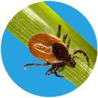 SEIZURES AND ALTERED MENTAL STATUS AFTER A TICK BITE  Understanding Lyme Disease