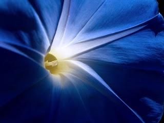 Blauwe Achtergronden | Barbara's Bureaublad Achtergronden in HD