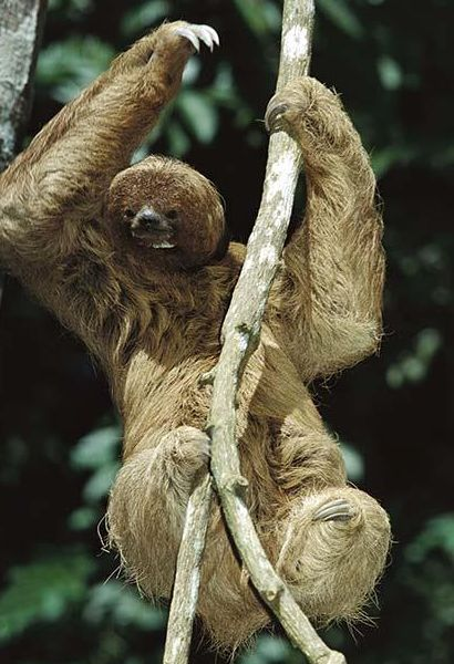 10 best images about Sloth Love on Pinterest | Studios ...