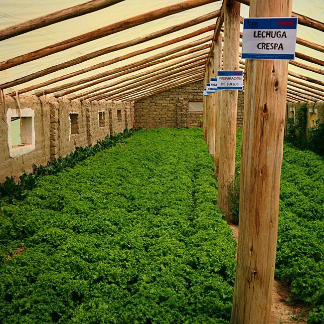 """Interested in building your own underground greenhouse? Here are 5 thingsyou should know…This low-tech technology is a true gift from mother nature.For as little as $300 you can create an underground greenhouse that will provide enough food to live on year-round.A walipini, meaning """"place of warmth"""" from the Amaraya Indian language, is an underground greenhouse with a transparent (usually plastic) covering that stays warm by passively soaking up the sun's heat and absorbing the earth's…"""