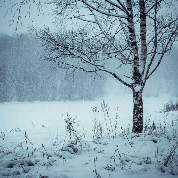 Фотографии Ольги Фирсовой