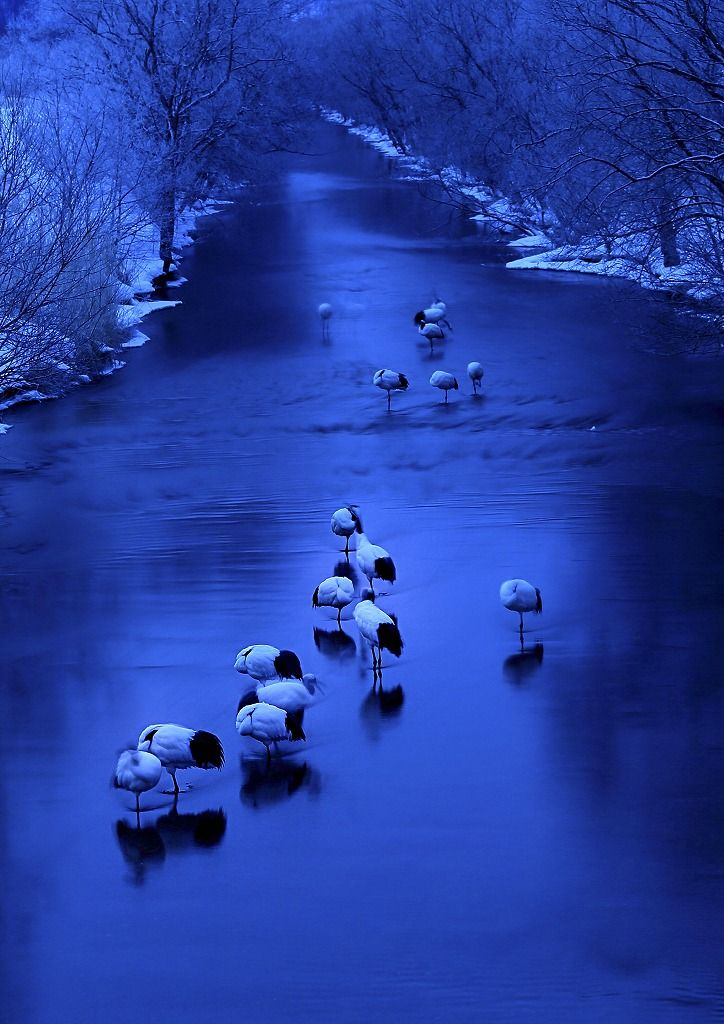 Morning of the cranes. #Creative #Photography #Blue
