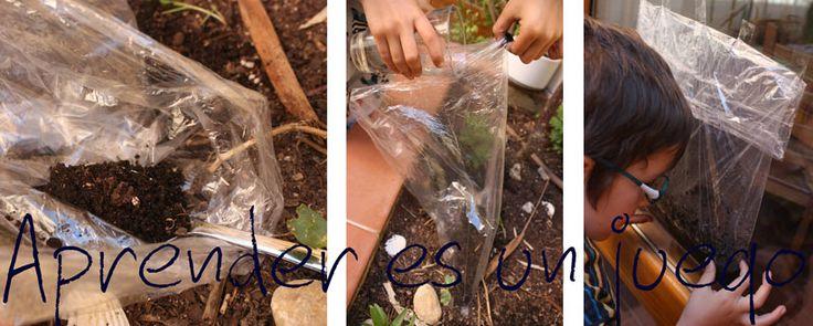 Este es un experimento sencillo que puede utilizarse para observar el comportamiento básico del agua en su ciclo.     Material necesario...