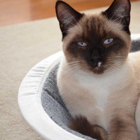 Buy Modern Cat & Dog Beds Online   Grey Hepper Nest Designer Bed   Hepper