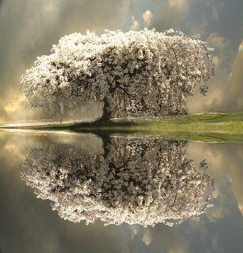 Ein ganz tolle foto  das wieder spiegel in Wasser der hintergrund  tolle Farbgewand