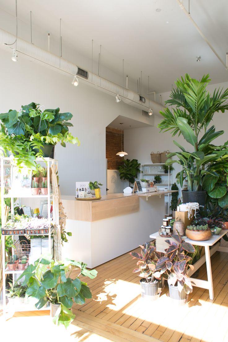 The Zen Succulent Plant Shop In Raleigh Plant Decor