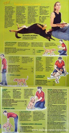 Testare il carattere del cucciolo - Test di Campbell