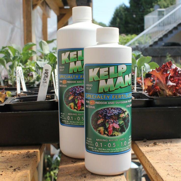 Kelpman Liquid Fertilizer is pure magic.