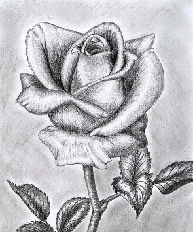 Картинки розы для срисовки, дети победы