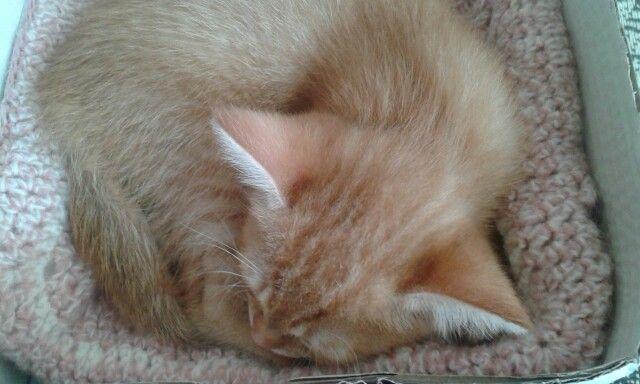 Small tiger sleeps