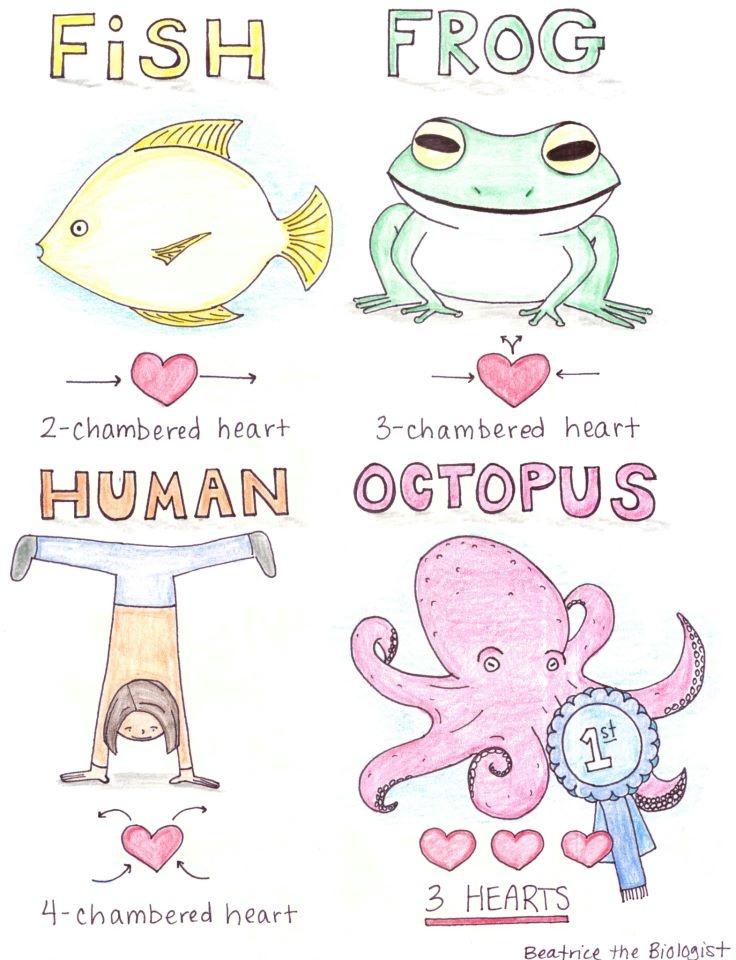 valentine's day biology jokes