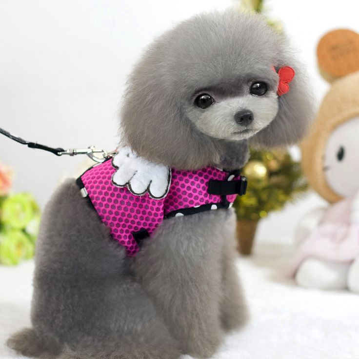 Best 25 Japanese Dog Grooming Ideas On Pinterest Asian