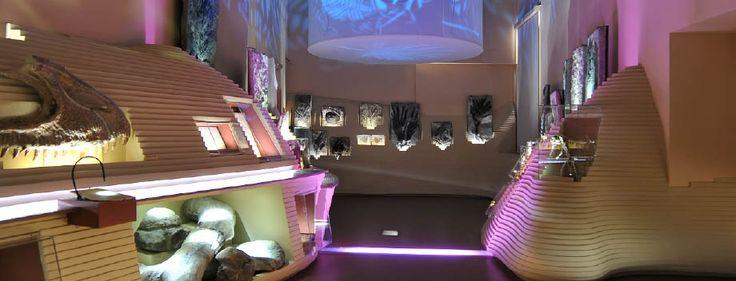 MUVE - Museo di storia naturale