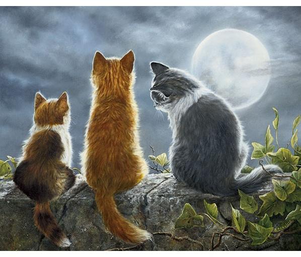Cat whisperer by Shirley Deaville