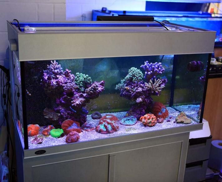 17 best ideas about saltwater aquarium setup on pinterest for Easy aquarium fish