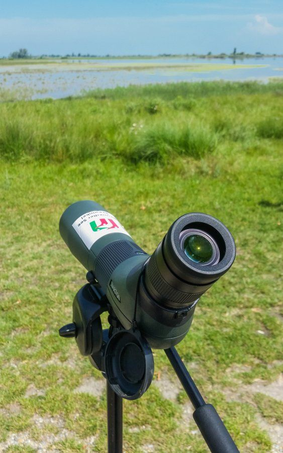 Bird Watching || Discover Beauty around Neusiedlersee in Burgenland Austria | The Travel Tester