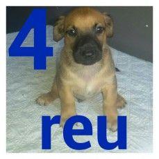 Puppyplaats.nl - liefe schatige puppies te koop 300 euro - Bastaard pups