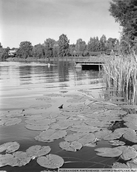 The swimmer.    Linhof Technika iii 4x5, Rodenstok 150mm. Ilford Delta 100.