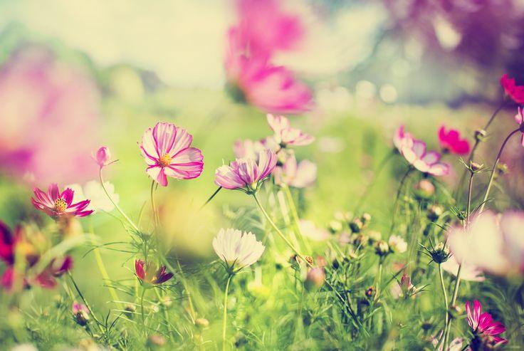 Welcher Gartentyp sind Sie? #News #Gartenbau