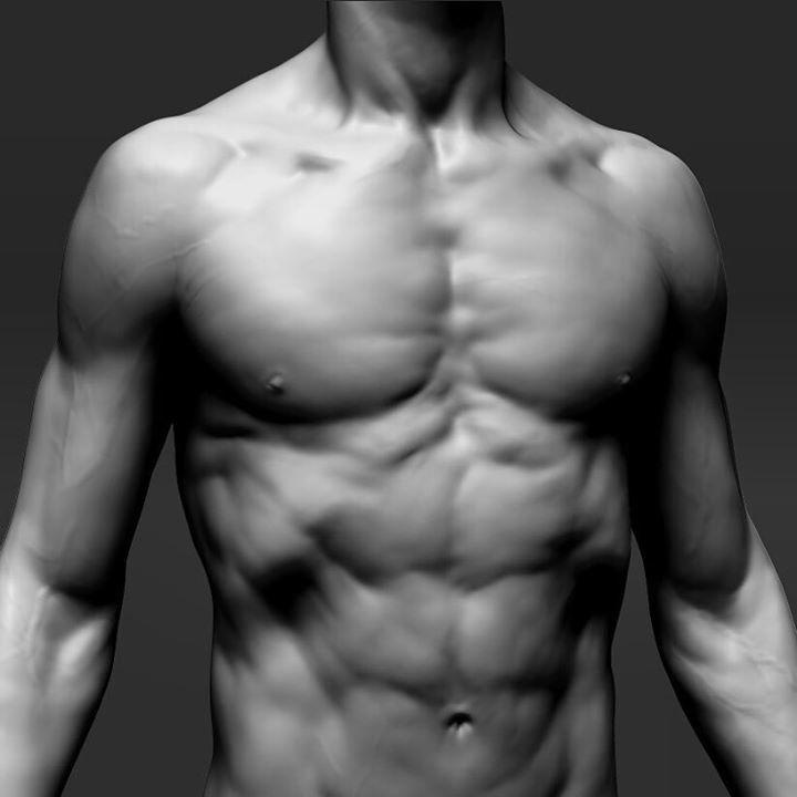 ArtStation - 解剖学の研究、Glaucoロンギ