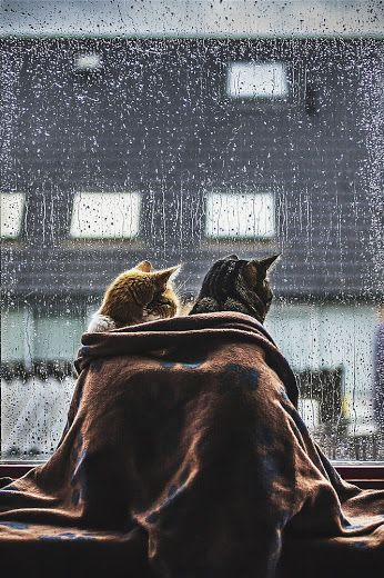 Cozy autumn cats